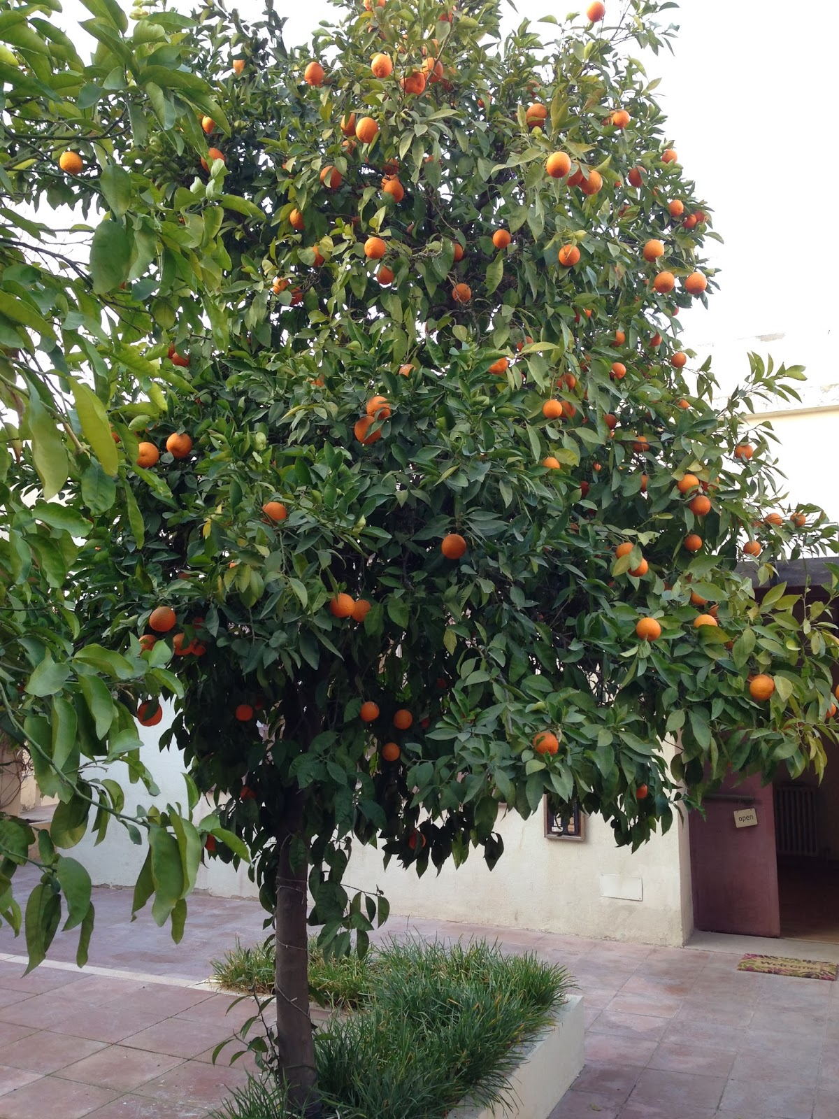 A lovely orange tree at the entrance of Nabad Gallery
